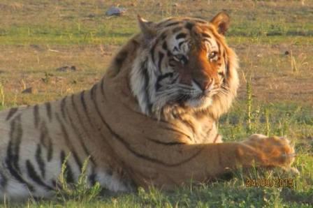 John Varty, Filmmaker, Big Cat and Tiger Safaris, Activist